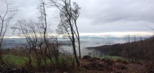 Blick in Richtung Muttenz, Rhein, mit dem Schwarzwald im Hintergrund