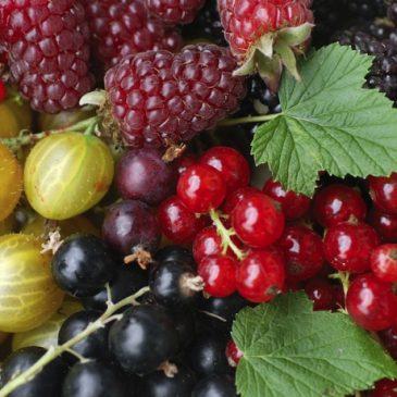 Die antioxidative Kraft von Beeren