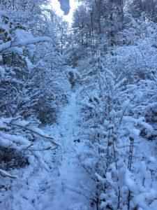 Mitte Woche kam der Winter zurück: Über verschneite Pfade geht es zur Arbeit