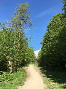 Waldweg beim K85